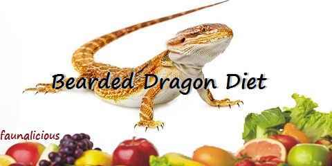 bearded dragon diet food