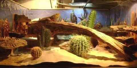 bearded dragon tank size setup decor