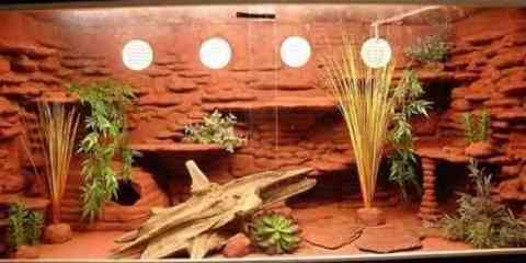 What You Need To Know To Set Up Bearded Dragon Cage Faunalicious