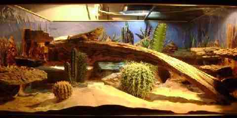 Leopard Gecko Cage How To Setup The Perfect Gecko Habitat
