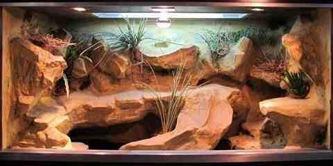 leopard gecko terrarium