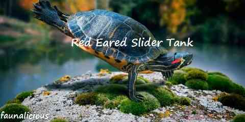 red eared slider tank